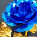 Flor azul con la hoja de oro imagen de archivo