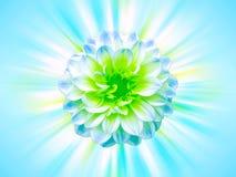 Flor azul con los rayos Foto de archivo