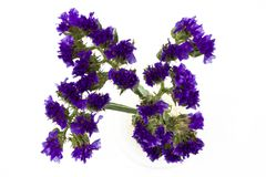 Flor azul de Statice aislada en el fondo blanco foto de archivo