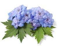 Flor azul del delphinium fotografía de archivo libre de regalías
