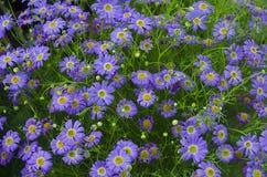 Flor azul del lino Imágenes de archivo libres de regalías