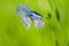 A flor azul do linho floresce no campo Fotografia de Stock Royalty Free