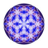 Flor azul e violeta da vida ilustração royalty free