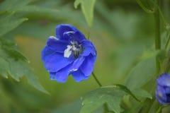 Flor azul em um fundo verde imagens de stock royalty free