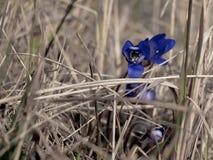 Flor azul en el campo Foto de archivo libre de regalías