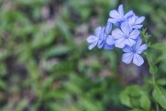 Flor azul en fondo verde borroso fotos de archivo libres de regalías