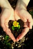 Flor azul en manos Foto de archivo libre de regalías