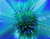 Flor azul esverdeado em um fundo borrado closeup Centro verde peludo Pistilos que colam para fora como agulhas Para o projeto Foto de Stock Royalty Free