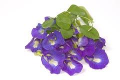 Flor azul hermosa Pigmentos de la flor Imagen de archivo