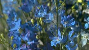 Flor azul - imagen imagen de archivo libre de regalías