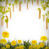 Flor background_31 Imágenes de archivo libres de regalías