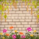Flor background_69 Fotografía de archivo libre de regalías
