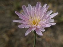 Flor baja de la selva imágenes de archivo libres de regalías