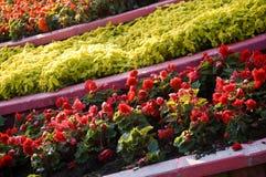 Flor bajo el sol Foto de archivo libre de regalías