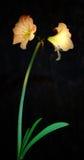 Flor bajo iluminación Fotografía de archivo