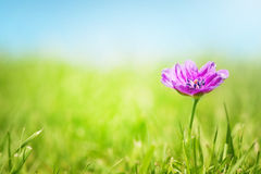 Flor bastante rosada Foto de archivo libre de regalías