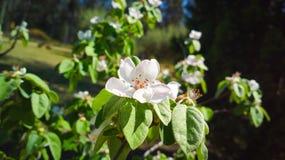 Flor blanca Foto de archivo