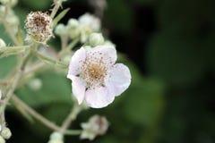 Flor blanca Imágenes de archivo libres de regalías