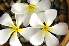 Flor blanca Fotografía de archivo libre de regalías