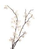Flor blanca artificial de Sakura aislada Foto de archivo