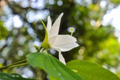 Flor blanca asombrosa después de la lluvia Imágenes de archivo libres de regalías