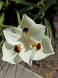 Flor blanca cercana ascendente hermosa 4k Imágenes de archivo libres de regalías