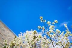 Flor blanca con el cielo azul y edificio en el fondo Imagen de archivo libre de regalías