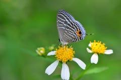 Flor blanca con la mariposa Imagenes de archivo