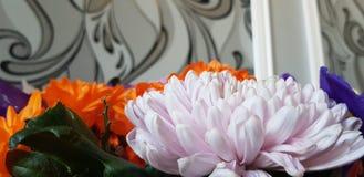 Flor blanca congelada en el momento imagenes de archivo