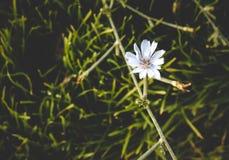 Flor blanca de la belleza fotografía de archivo
