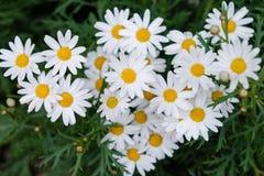 Flor blanca de la floración en parque imagen de archivo
