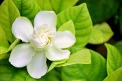 flor blanca de la naturaleza Fotografía de archivo