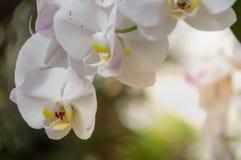 Flor blanca de la orquídea en el parque fotografía de archivo libre de regalías