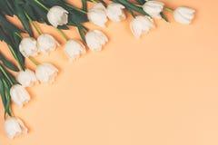 Flor blanca de los tulipanes fotos de archivo
