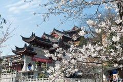 Flor blanca de Sakura Imágenes de archivo libres de regalías