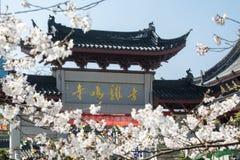 Flor blanca de Sakura Foto de archivo libre de regalías