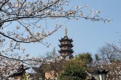 Flor blanca de Sakura Imagenes de archivo