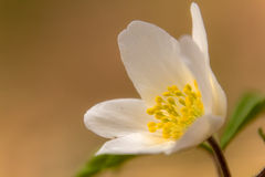 Flor blanca debajo de los árboles de madera Fotografía de archivo libre de regalías