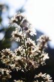 Flor blanca del cortador Imágenes de archivo libres de regalías