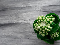 Flor blanca del flor en fondo gris Copie el espacio Fotos de archivo libres de regalías