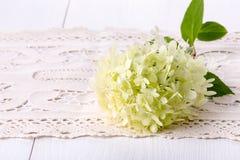 Flor blanca del Hydrangea imagenes de archivo