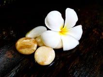 Flor blanca del Plumeria Foto de archivo libre de regalías