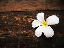 Flor blanca del plumeria en el tablero de madera foto de archivo libre de regalías