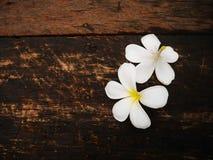 Flor blanca del plumeria en el tablero de madera imagen de archivo libre de regalías