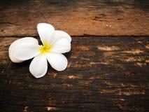 Flor blanca del plumeria en el tablero de madera fotografía de archivo