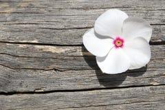 Flor blanca del polemonio en un fondo de madera Imagenes de archivo