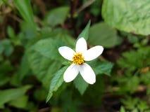Flor blanca del primer Imágenes de archivo libres de regalías