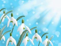 Flor blanca del snowdrop de la primavera con el fondo del bokeh de la nieve que cae abstracta Fotografía de archivo libre de regalías