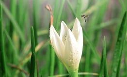 Flor blanca dulce suave abstracta y fondo verde Foto de archivo