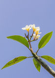 Flor blanca en árbol imagen de archivo libre de regalías